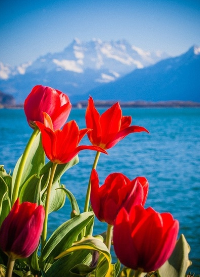 Flowers Red Scenery Mountain Nature Beauty Beautiful Background Beautiful Nature Beautiful Flowers Nature