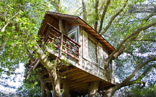 SAN FRANSICSO / Tree House on Air BnB