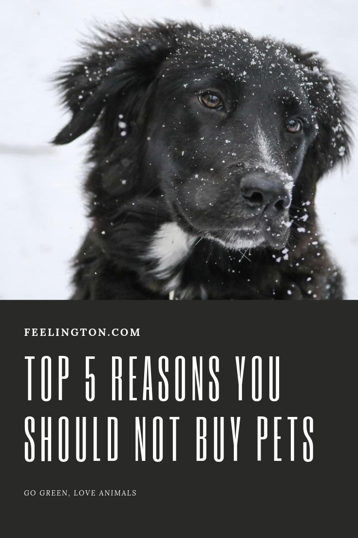 Top 5 Reasons You Should Not Buy Pets Buy Pets Pets Dog Store
