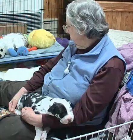 Carlene White, founder of the Great Dane Service Dog ...