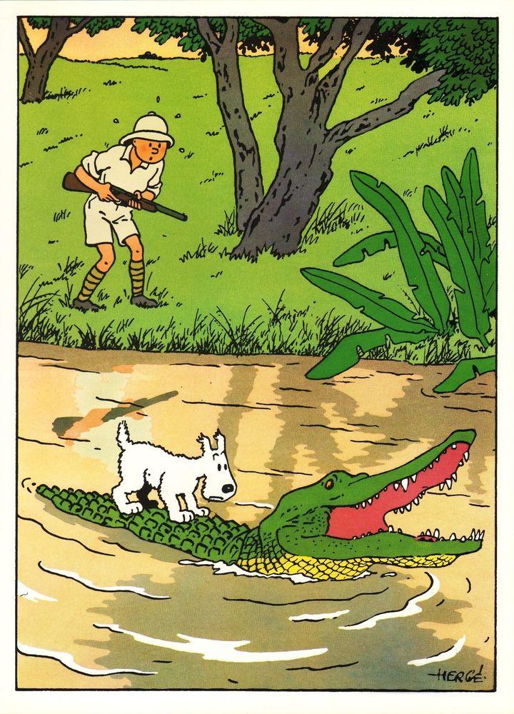 Milou crocodile snowy tintin congo tint n tint n en 2019 tintin vintage comics et cartoon - Dessin anime les crocodiles ...