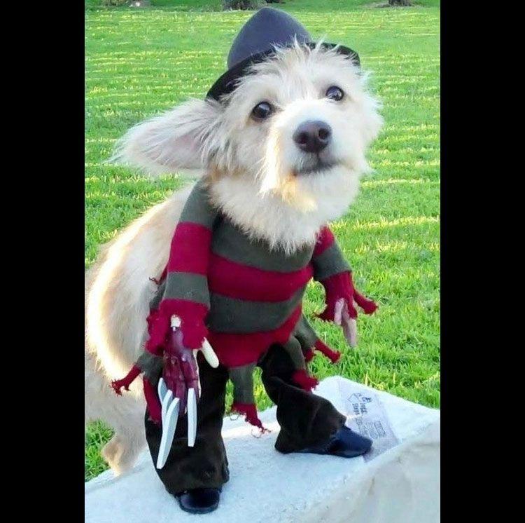 Freddy Krueger Dog Costume Cute Dog Costumes Pet Costumes Dog