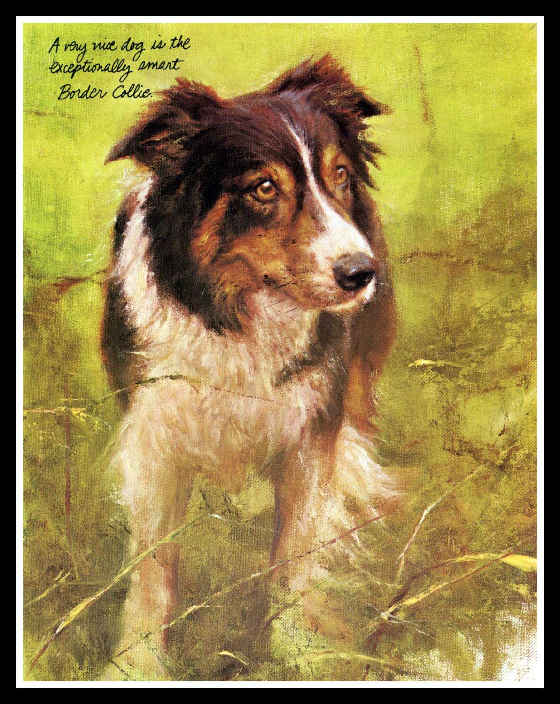 Maravillosos grabados de un Border Collie y Shetland Sheepdog ...
