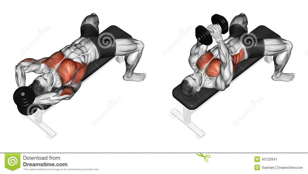 Exercising. Link Dumbbells From Behind The Head - Download ...