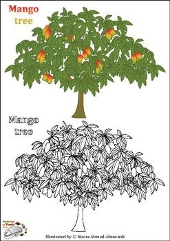 Mango Tree Coloring Pages Fun Questions And Facts Tree