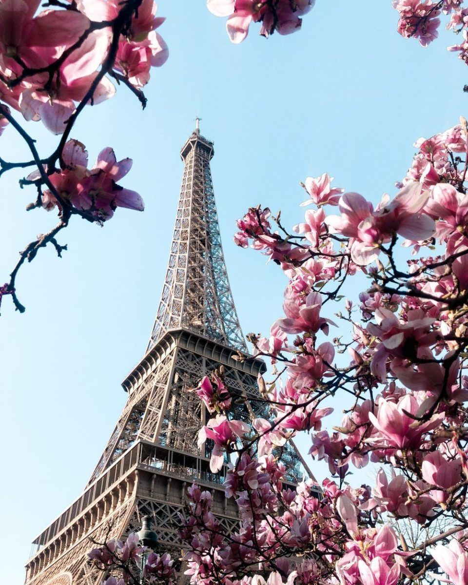 Paris In Bloom Best Magnolia And Cherry Blossom Locations Paris In Spring Eiffel Tower Photography Cherry Blossom