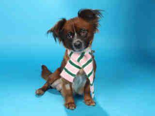 Adopt A Pet Humane Society Of Missouri Http X2f X2f Www Hsmo Org Humane Society Pets
