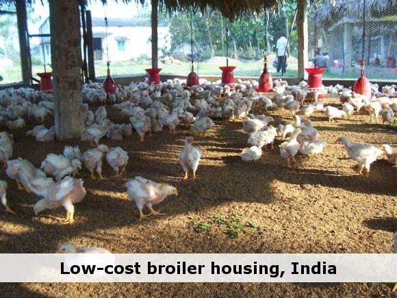Simple Poultry Housing Design Broiler Poultry House Poultry Farm