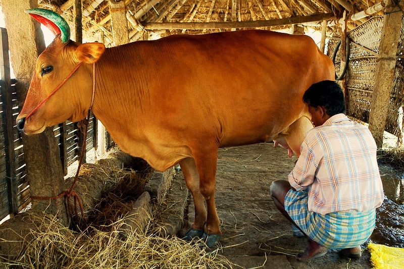 Holy cow meaning in tamil