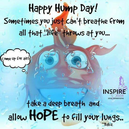Happy hump day wednesday pinterest wednesday greetings happy hump day m4hsunfo