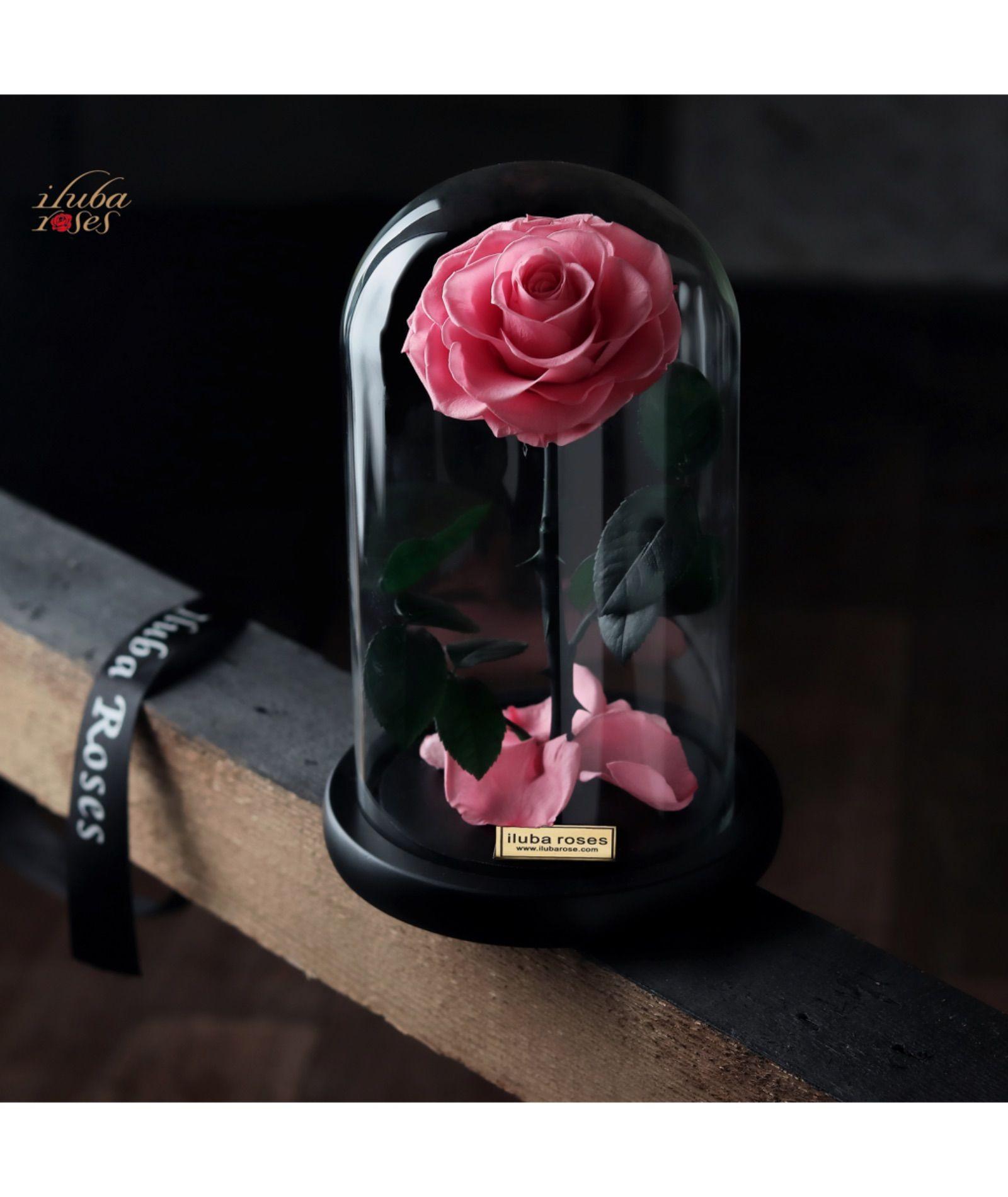 فازة ورد ايلوبا روز زهري طبيعي دائمة محفوظة Rose In A Glass Gifts Pink Rose Flower