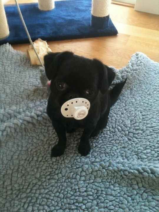 This cute girl who loves her pacifier.