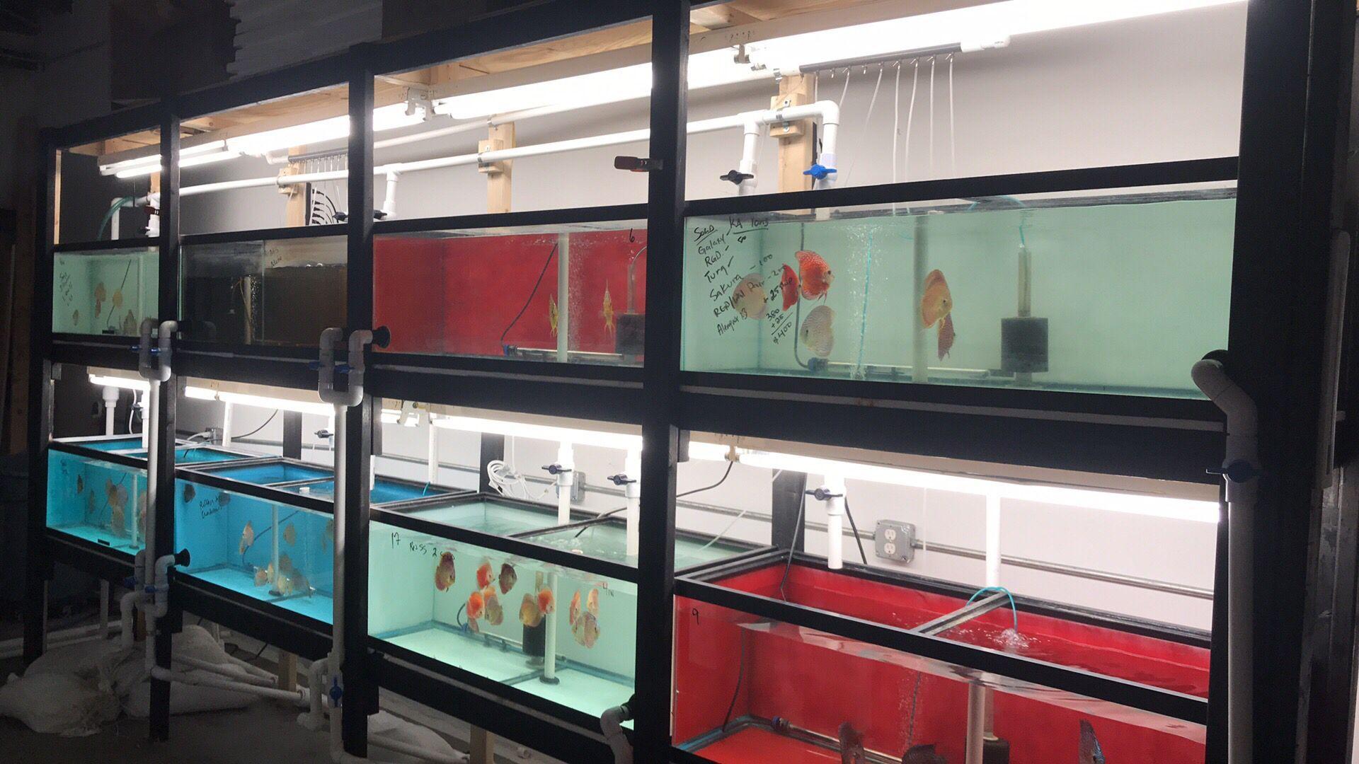 Live Fish Store