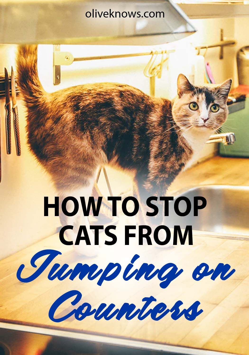 How to Stop Cats from Jumping on Kitchen Counters (Finally