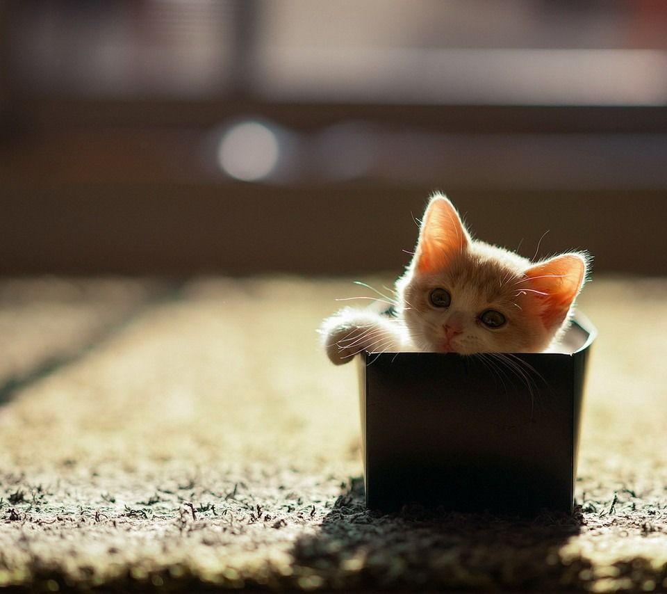 ねこ 猫 動物 かわいい 壁紙 待ち受け 高画質 18171307 猫の愛