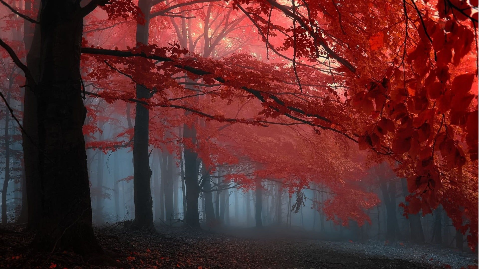 Black And Pink Trees Painting Red Tree Illustration Nature Landscape Trees Forest Branch Leaves Fall Mist 1 Fantasy Landscape Autumn Forest Landscape