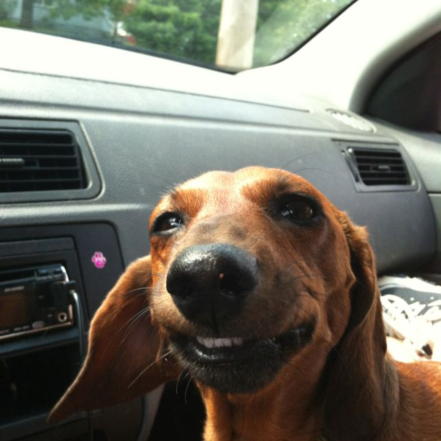 My Dog Callie Smiling