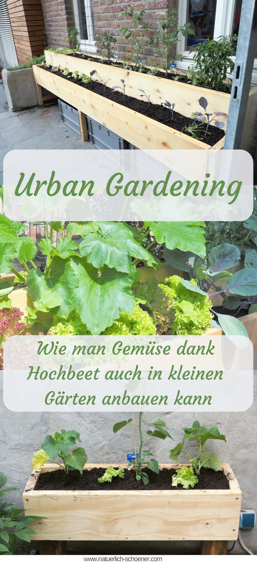 Urban Gardening For Beginners opposite Garden Landscaping ...