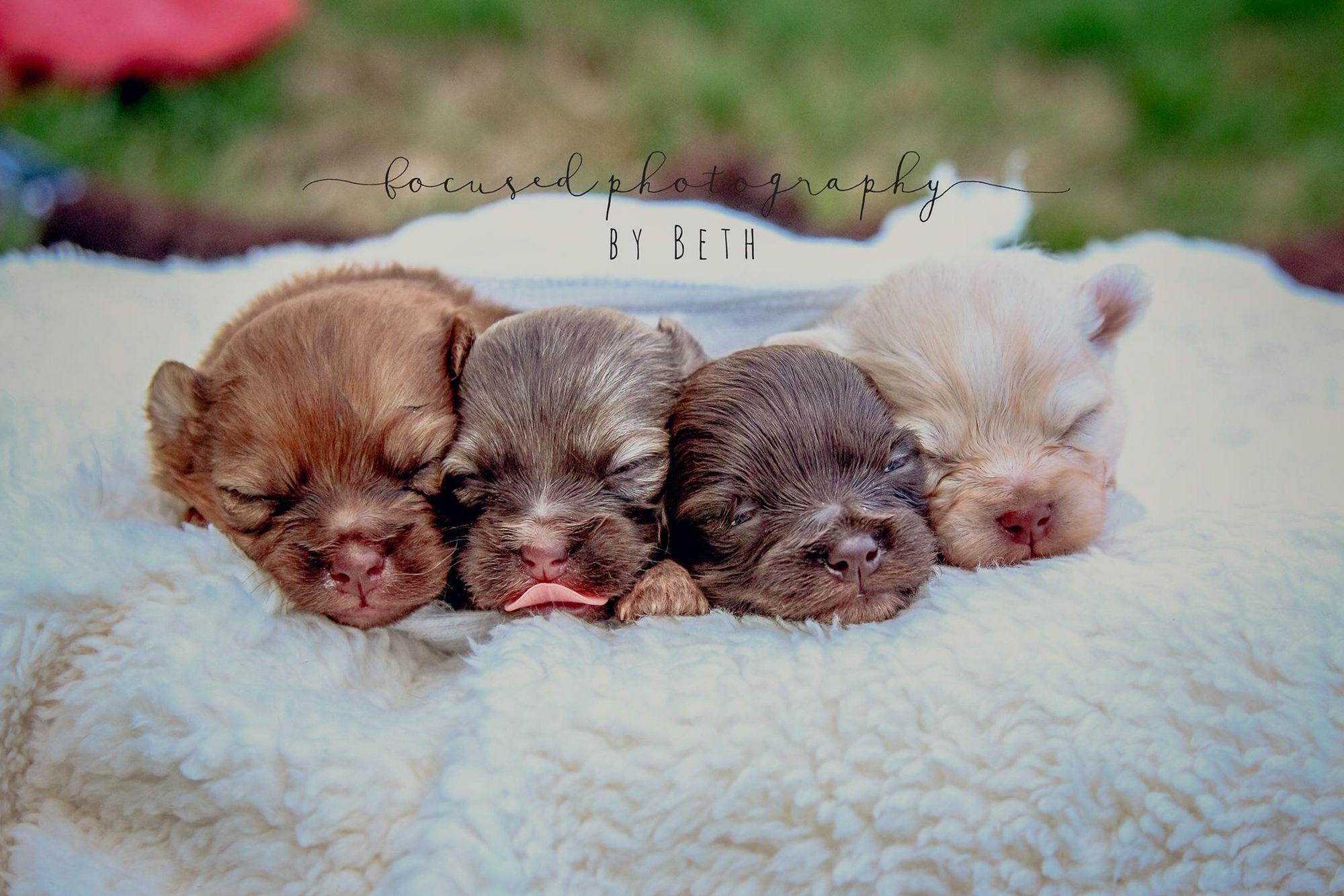 Newborn Puppy Session Www Facebook Com Focusedbybeth Http