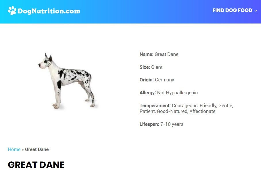 Great Dane Dog Breed Information Dane Dog Great Dane Dogs Dog