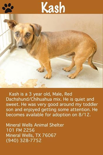 Come Meet Kash A Dog With Personality And Lots Of Love To Give Ready For His Forever Home This Is A Kill Shelter Miner Animal Shelter Dog Adoption Animals