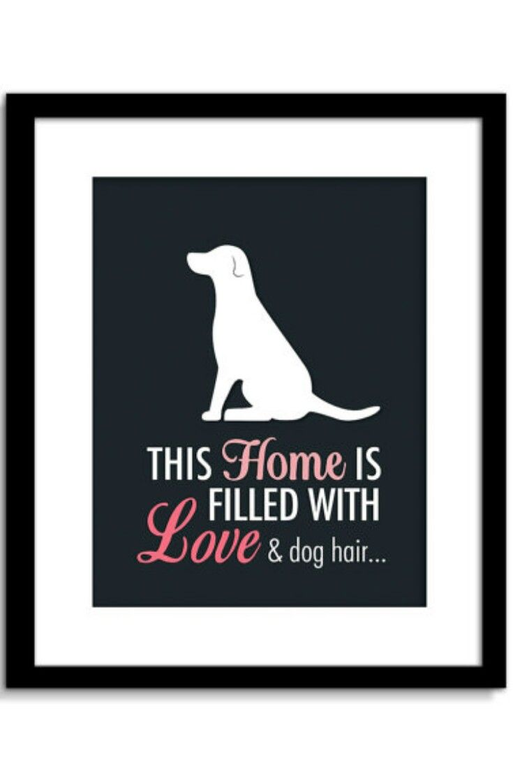 Funny Dog Wall Art, Funny Dog Sign, This Home Is Filled With Love U0026 Dog  Hair, Dog Wall Decor, Dog Home Decor #ad | Fofurices | Pinterest | Potes E  Cão