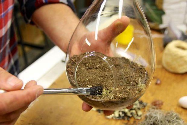 Как сделать флорариум своими руками