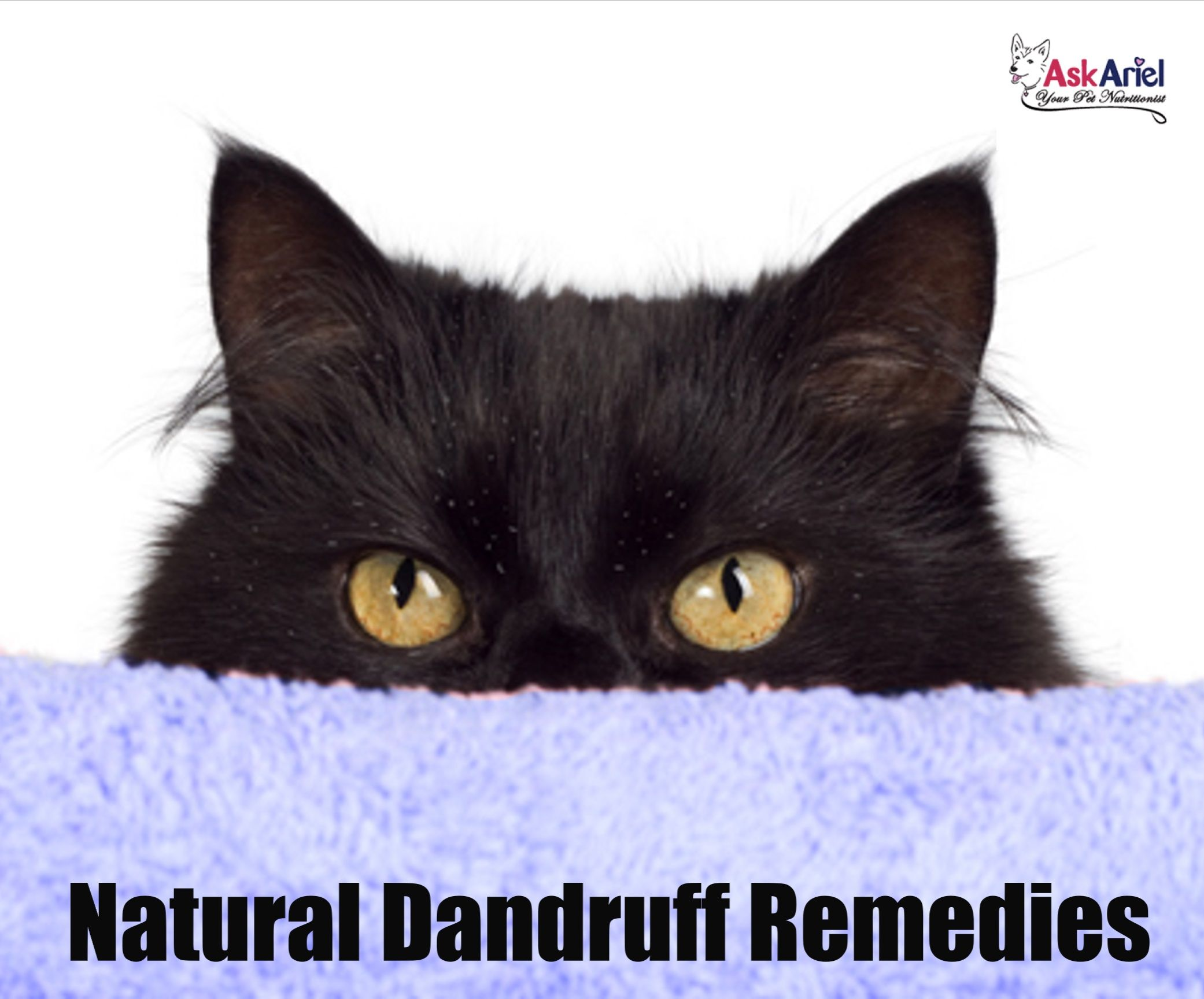 Natural Remedies For Cat Dandruff In 2020 Cat Dandruff Dandruff Causes Cats