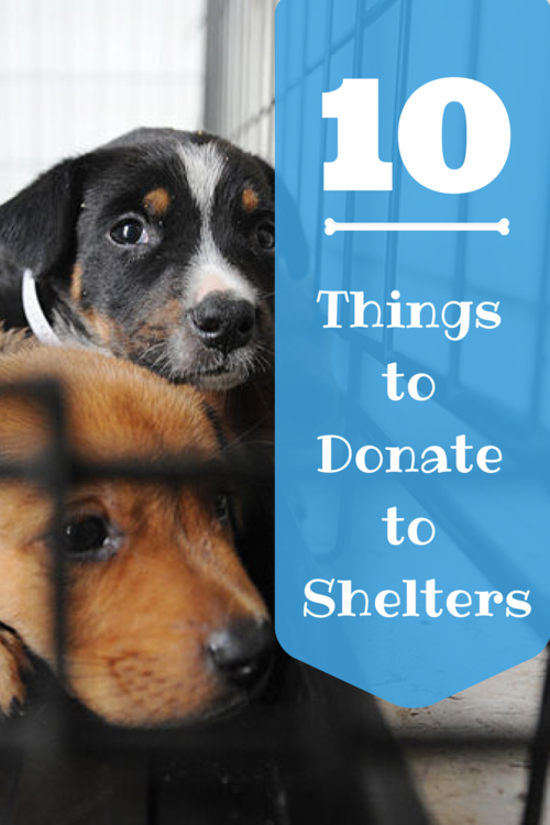 10 Things To Donate To Animal Shelters Animal Shelter Donations