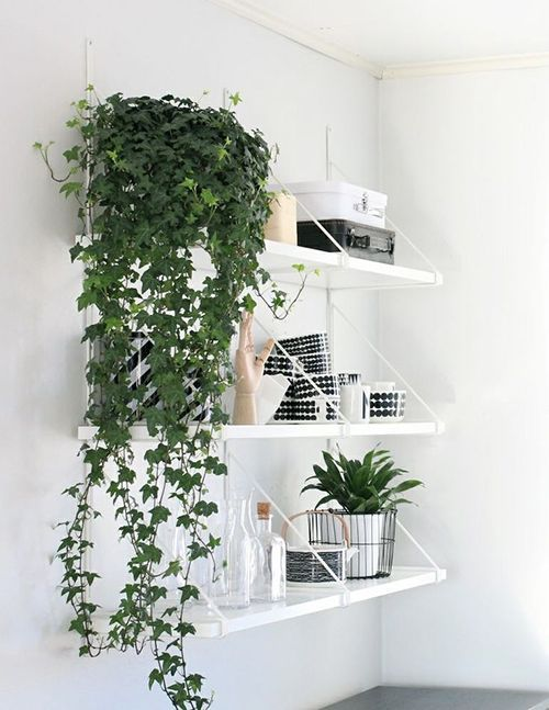 Love This Flowing Look With Images Indoor Vines Growing