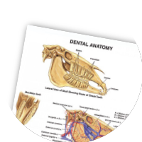 Veterinary (With images)   Veterinary, Joints anatomy ...