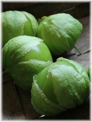 in focus toma verde tomatillo john scheepers kitchen garden seeds rh pinterest com Light Bulb Scheepers Bulbs