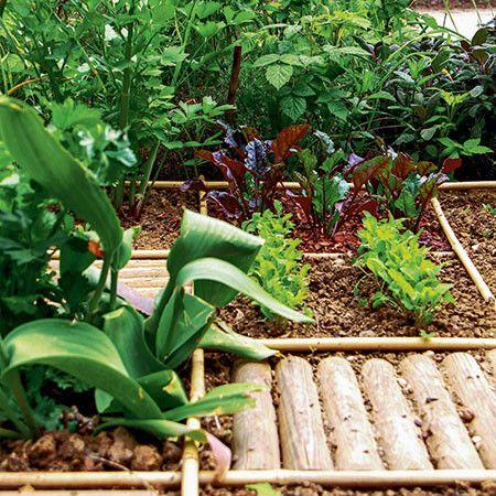 Comment Installer Et Realiser Un Potager Urbain Jardin Potager