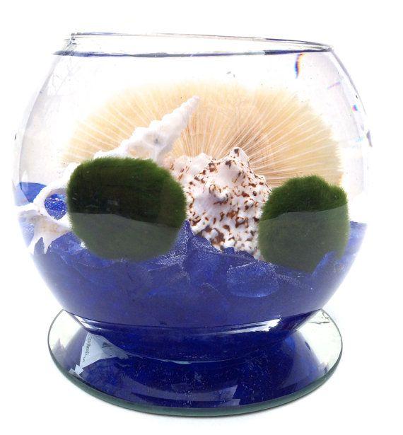 Marimo Terrarium/Marimo Aquarium/Japanese by EclecticZenMarimo, $39.00