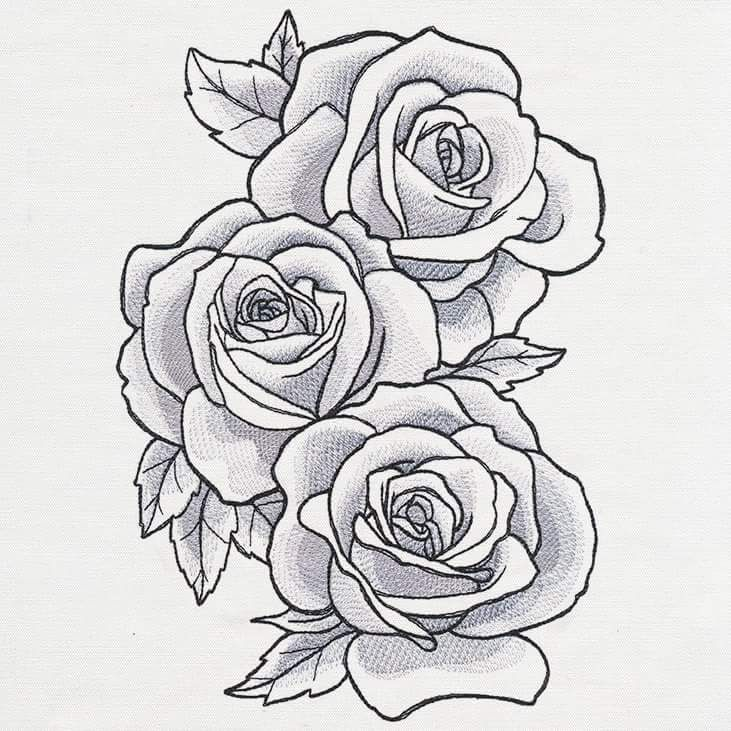 13221110 10153629260092503 4482030102863693379 N Jpg 731 731 Rose Drawing Tattoo Roses Drawing Flower Drawing