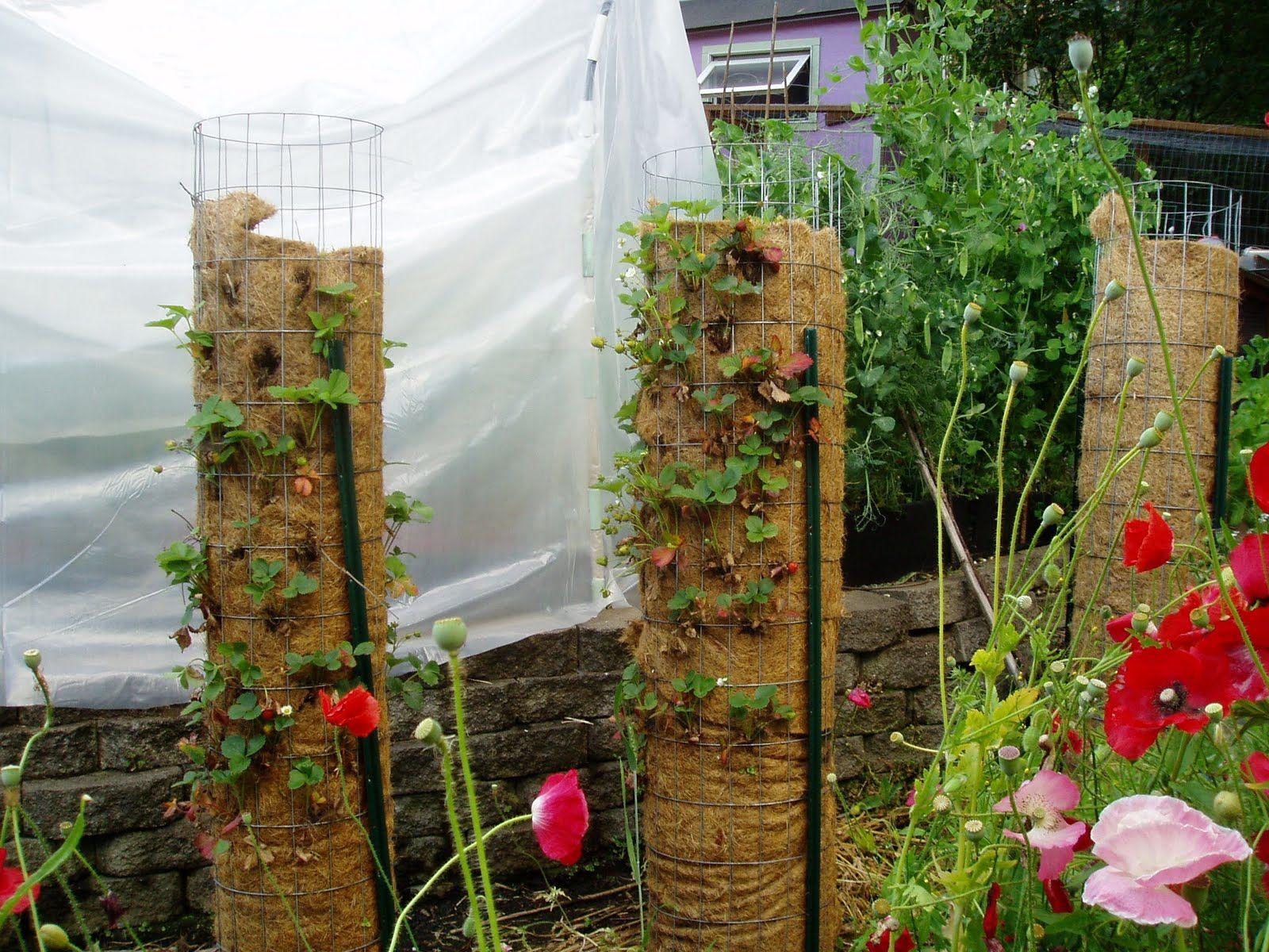 DIY strawberry towers | Garden fruit | Pinterest | Strawberry tower ...