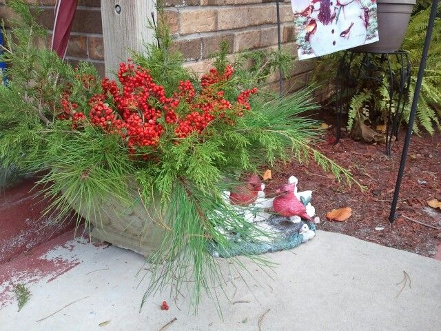 Cedar, pine boughs, and red berries for outdoor Christmas decor