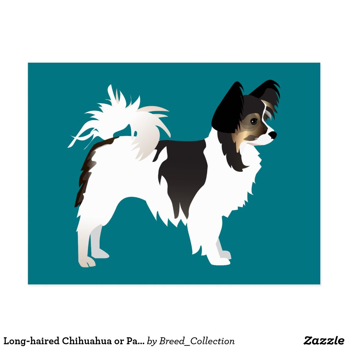 Long Haired Chihuahua Or Papillon Basic Design Postcard Zazzle Com Papillon Dog Long Haired Chihuahua Chihuahua [ 1106 x 1106 Pixel ]