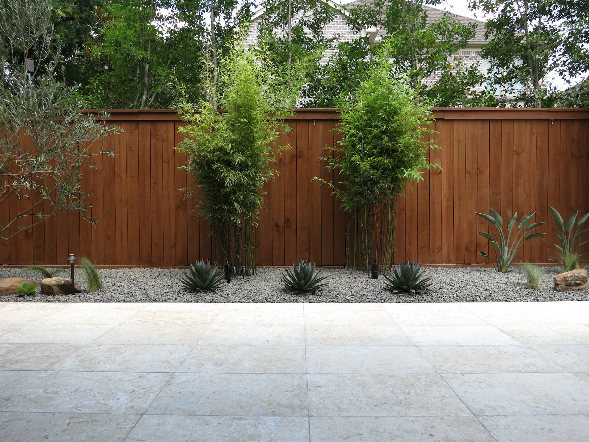 Contemporary Landscaping in Houston TX. Black bamboo, Blue Glow ...