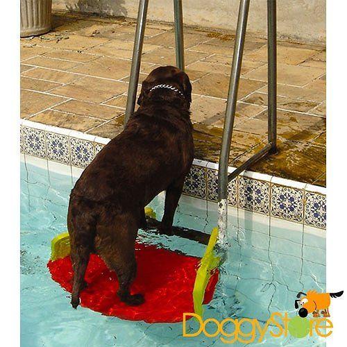 Plataforma para Piscina - Save Dog » Acessórios » Diversos | Doggy Store - Só para CACHORRO, brinquedos para cães, coleira, guia, cinto de segurança, peitoral, capa para carro, clicker e apito, acessórios para adestramento e muito mais para seu cão!