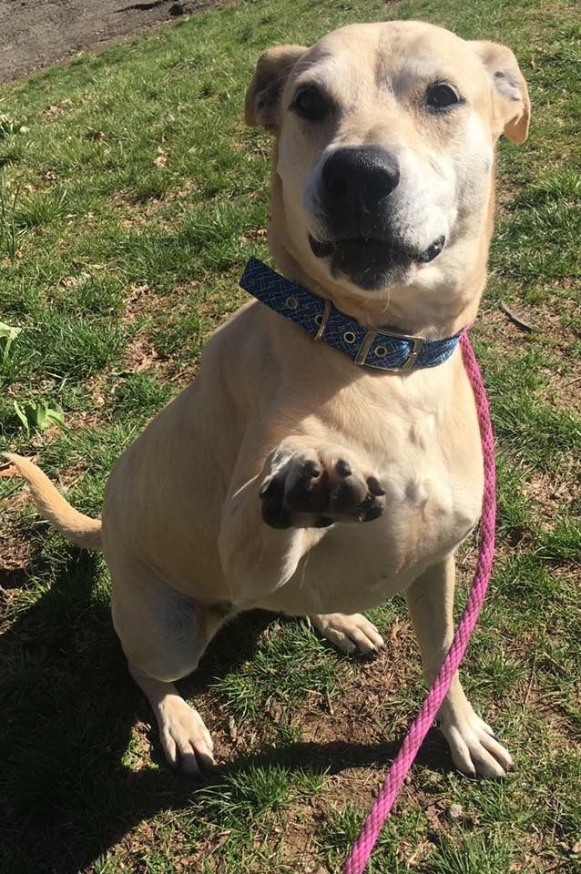 Adopt Chip the Chipper Gal on Dog boarding near me, Dogs