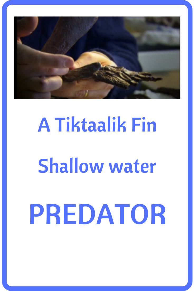 What Was Tiktaalik Prehistoricanimals Tiktaalik Was Believed To Be A Shallow Water Predator And Is A Fascinating Prehistoric Animals Sea Creatures But The Pr In 2020 Prehistoric Animals Dinosaurs Prehistoric Animals