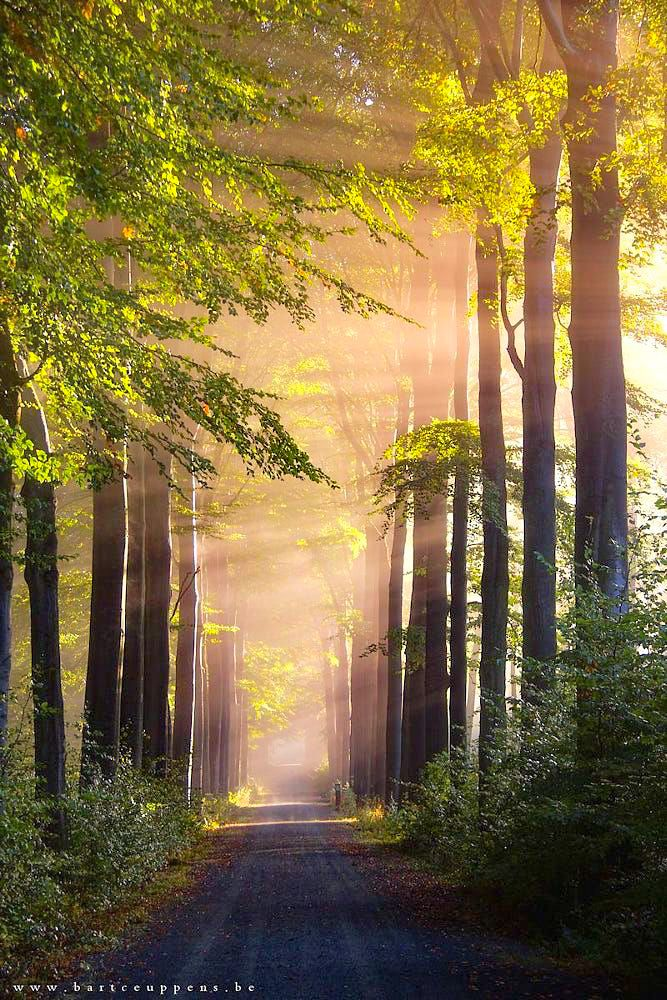 Light In The Forest (no Location Given) By Bart Ceuppens Cr. | 1 Country  Roads And Trails | Pinterest