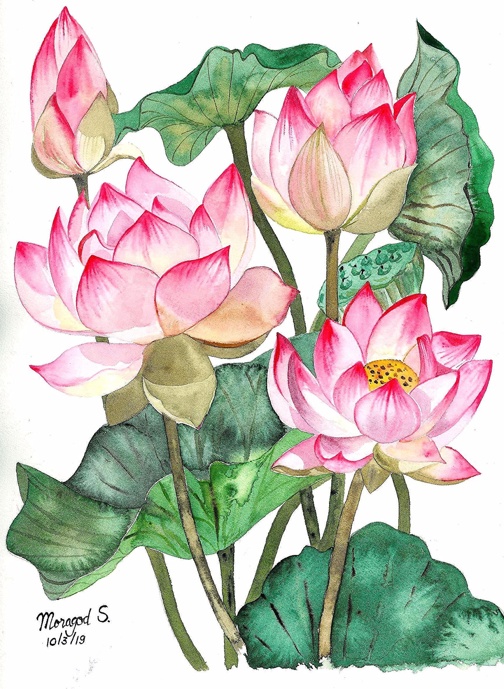 My Lotus Painting Peaceful Lotus Watercolor Painting ดอกบ ว ว ธ การวาดดอกไม ศ ลปกรรม ศ ลปะดอกไม