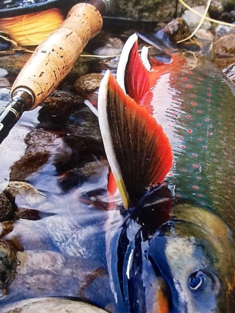 Freshwater fish magazine - Beautiful Fish
