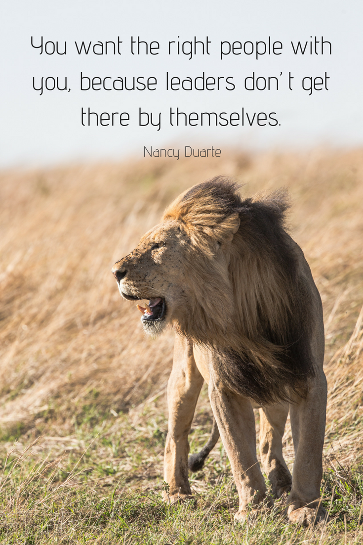 Leadership Lessons From The Masters Animals Animals Images Lion