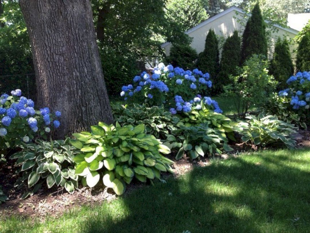 50 Most Beautiful Hydrangeas Landscaping Ideas To Inspire You 016 With Images Shade Landscaping Hydrangea Landscaping Backyard Landscaping