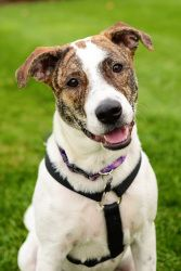 Allie Is An Adoptable Hound Dog In Grand Rapids Mi Hi My Name And I M A Sweet Fun Loving Pup Am Mix Of Some Sort No One Really