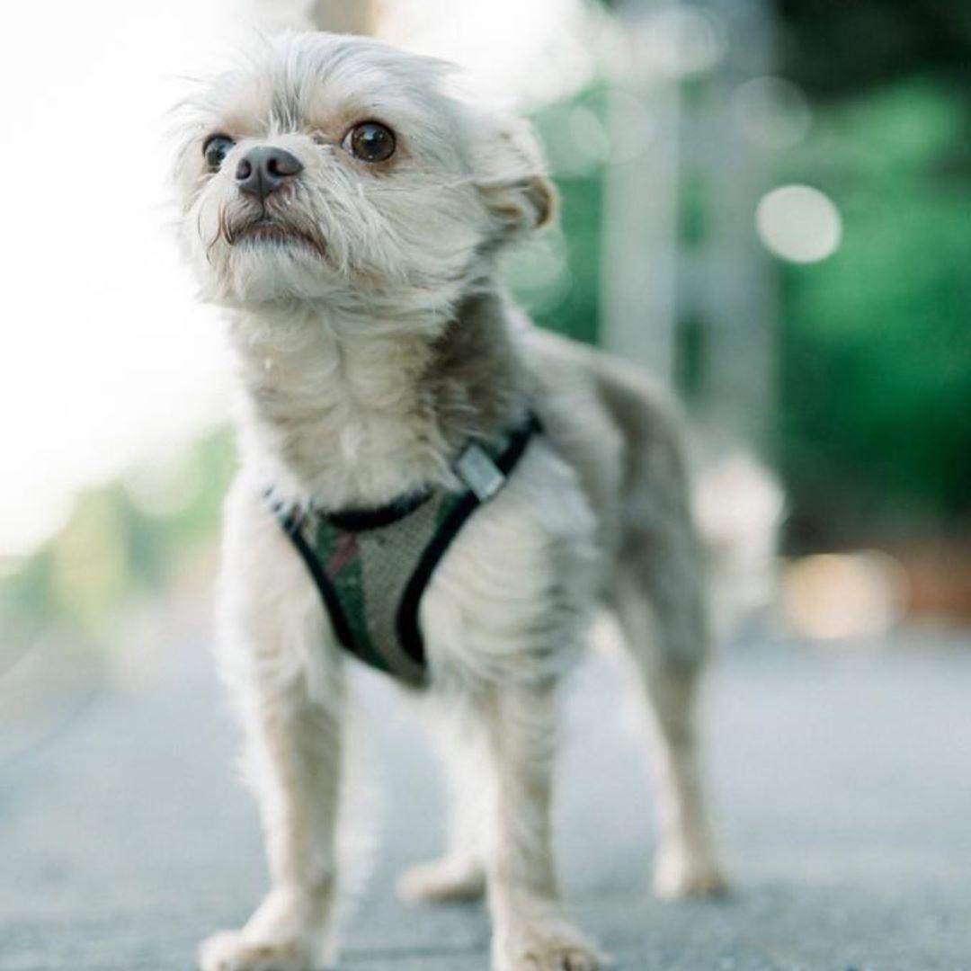 Loooooui ... #dog #dogsofinstagram #dogs #puppy #dogstagram #instadog #pet #doglover #love #dogoftheday #cute #doglovers #instagram #pets #of #puppylove #doggo #puppies #cat #doglife #puppiesofinstagram #ilovemydog #dogsofinsta #animals #hund #doggy #petstagram #k #animal