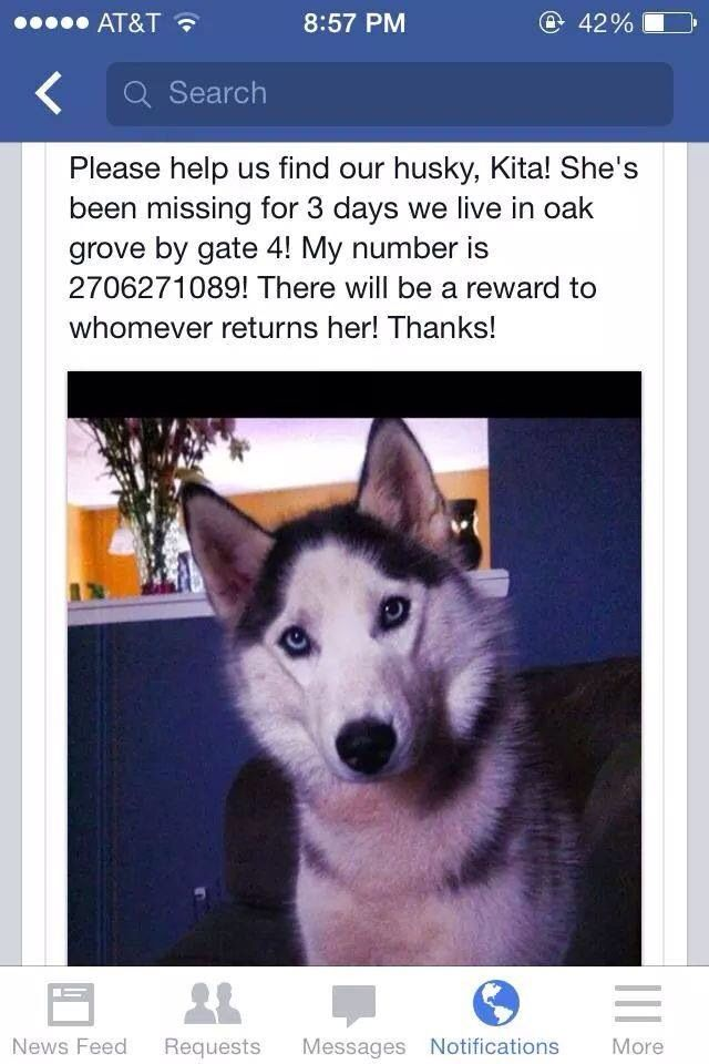 Pin By Us Lost Dog Registry On B W Female Siberian Huskies Us